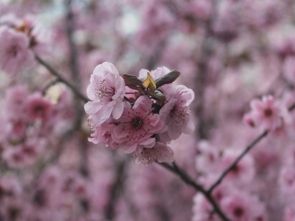 Proleće: šta raditi, a šta ne